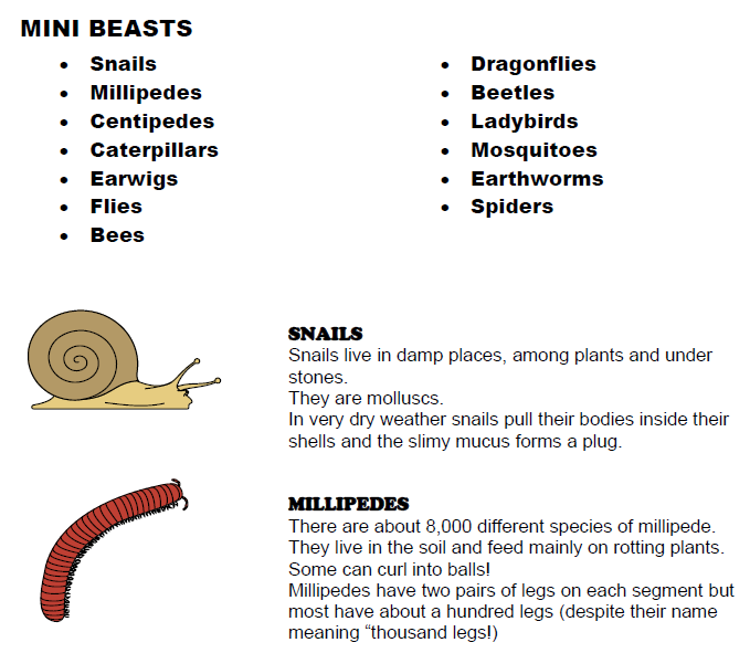 Mini Beasts Spotter Guide