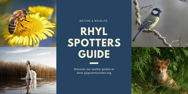 Rhyl Nature & Wildlife Spotter Guides