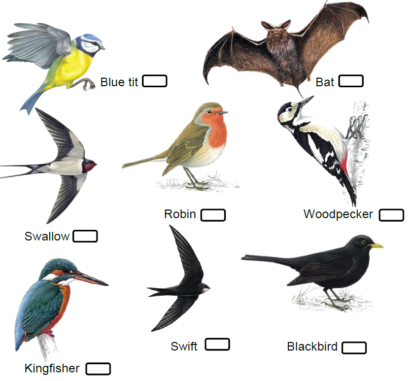 Small Birds Spotter Guide