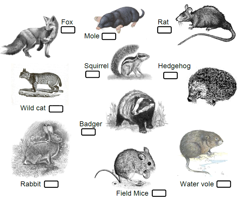 Wild Animals Spotter Guide